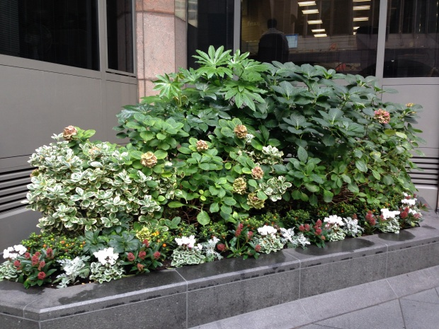 Shady Plantings outside Office Buildings, London
