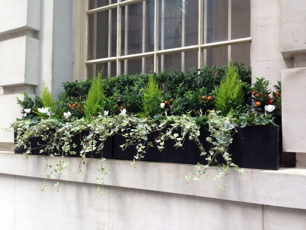 Window Boxes outside Office Building