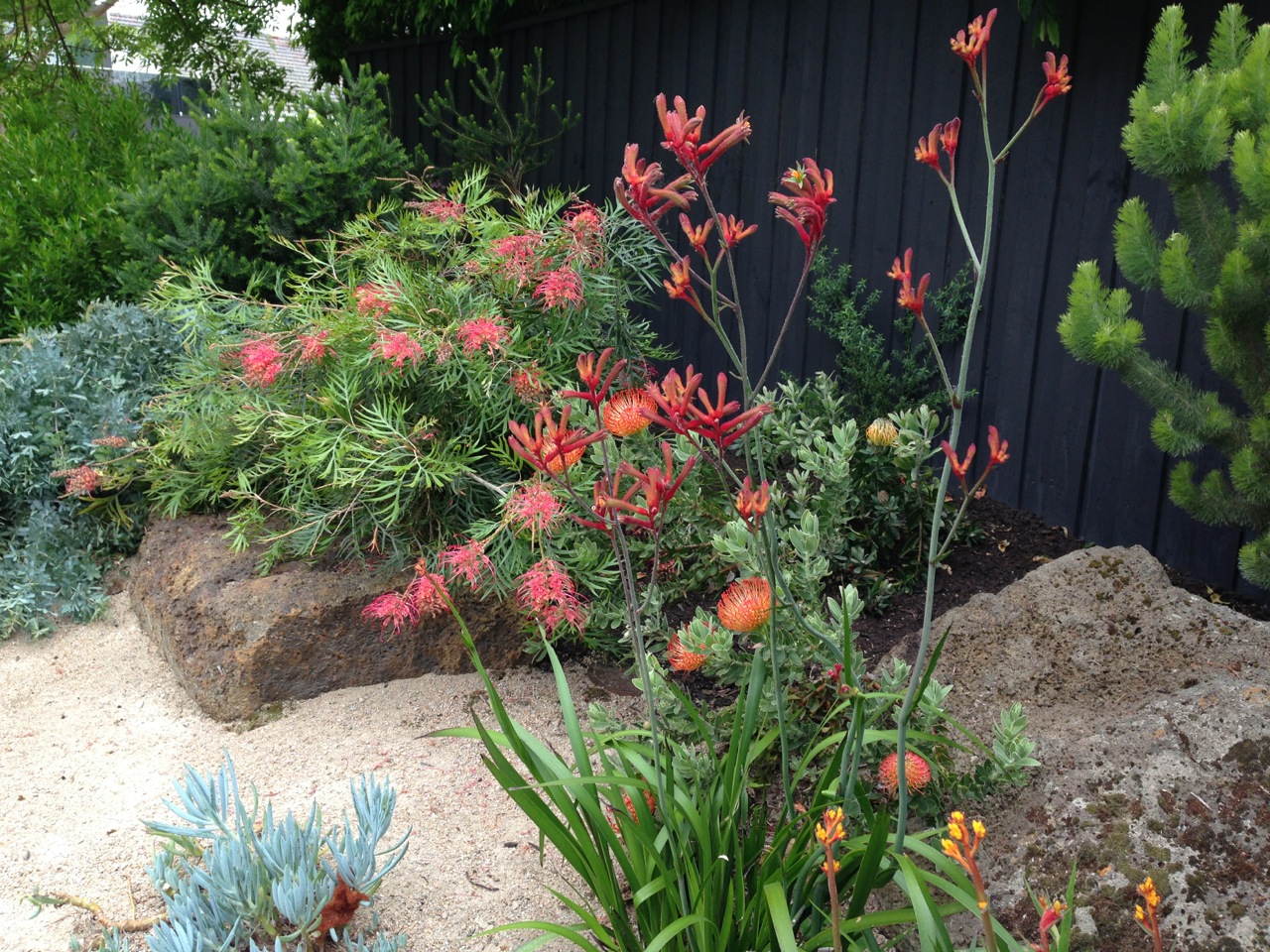 The best garden designer in australia janna schreier for Australian native garden design ideas
