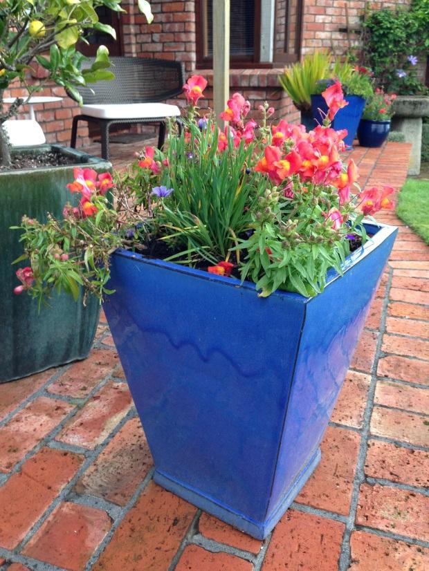 Colourful pots at Puketarata