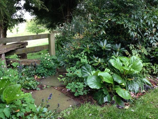 Healthy shade loving plants at Puketarata
