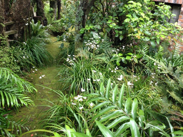Mossy plantway through Te Kainga Marire