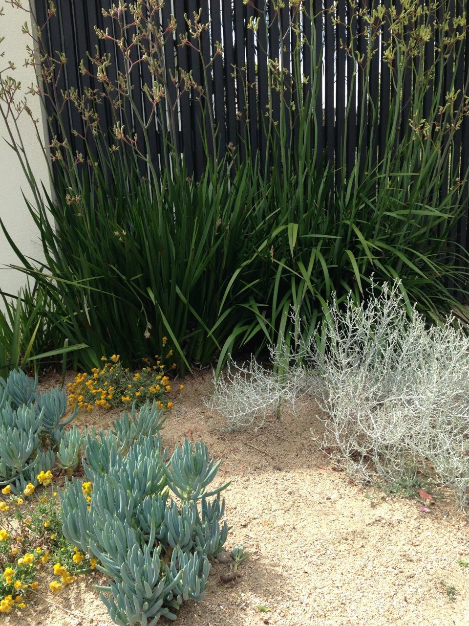 The best garden designer in Australia Janna Schreier Garden Design