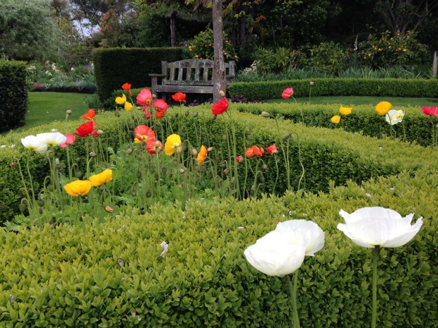 Poppy parterre garden at Puketarata