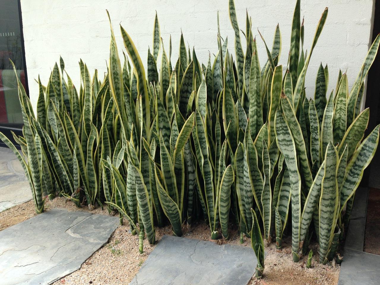 The best garden designer in Australia? – Janna Schreier ...