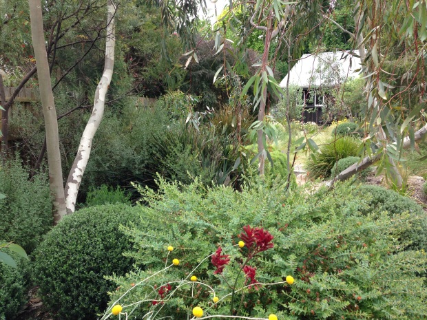Stunning native garden at Woodcote
