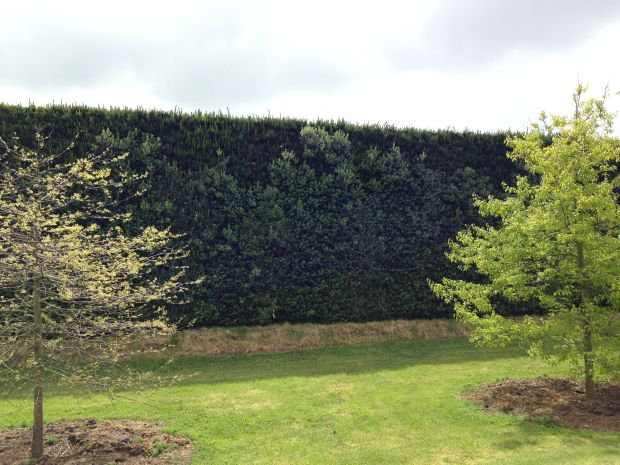 Tapestry hedge at Gravetye Garden