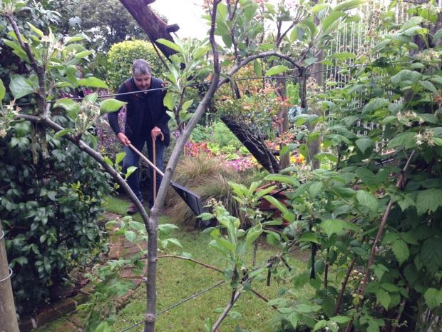 Tekainga Marire Garden in New Plymouth