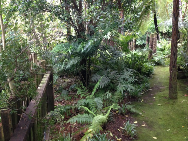 Tree fern grove at Te Kainga Marire