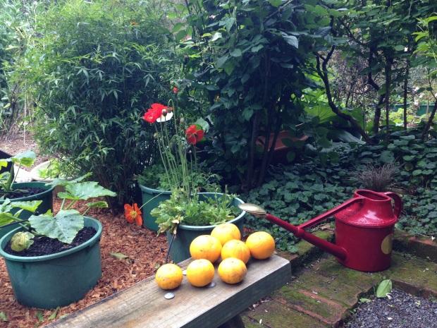 Vegetable garden at Te Kainga Marire
