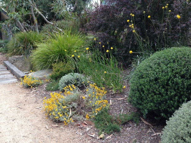 Yellow native border at Sandra McMahon's 'Woodcote'