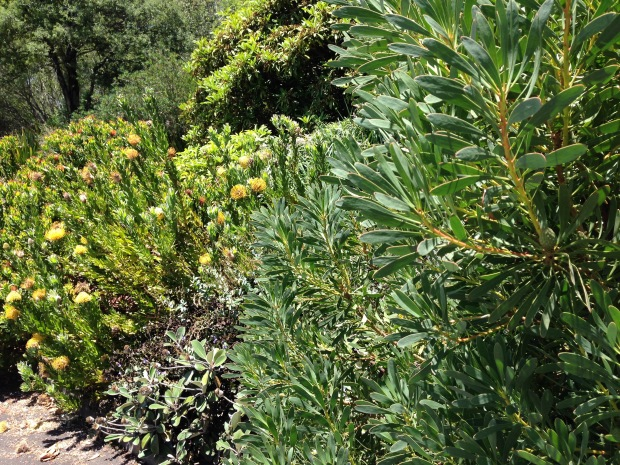 Australian native colours and textures at Mount Tomah Botanic Garden