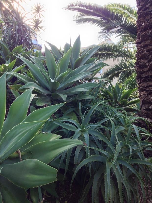 Bold succulent textures at Wendy's Secret Garden