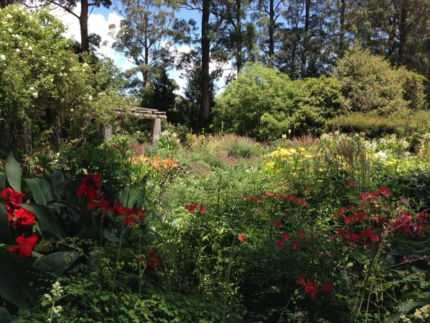 Bright colours in the Formal Garden at Mount Tomah Botanic Garden