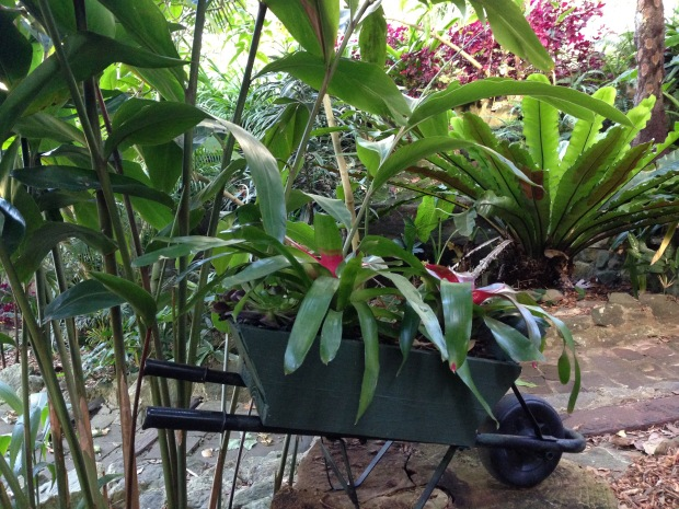 Bromeliads in a mini wheelbarrow at Wendy's Secret Garden