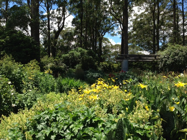 Clearing in the Eucalptus forest for the Formal Garden at Mount Tomah Botanic Garden