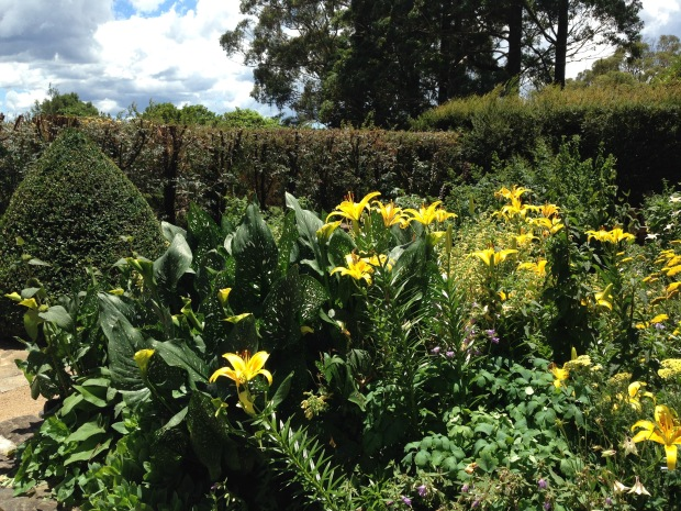 Contrast of clipped topiary and soft herbaceous plants at Mount Tomah Botanic Garden