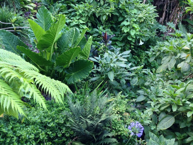 Dense, bold plantings on a slope at Wendy's Secret Garden