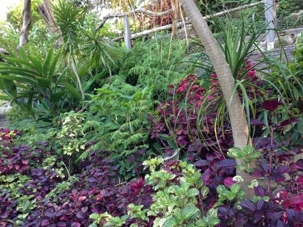 Iresine dominants this steep bank at Wendy's Secret Garden