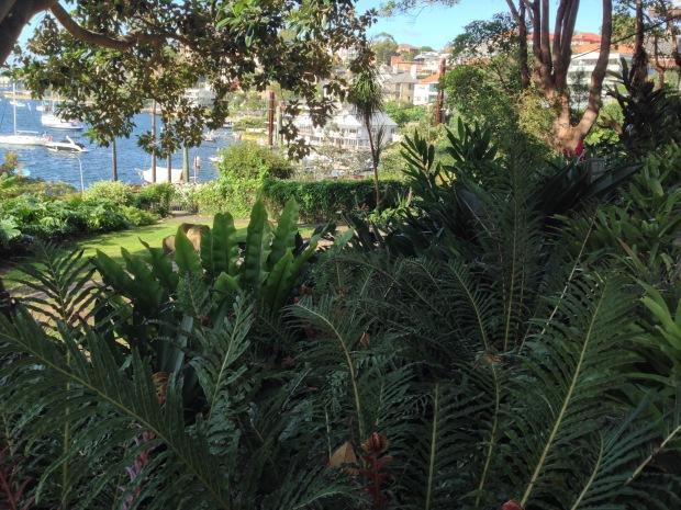 Mixed ferns underneath the Moreton Bay fig at Wendy's Secret Garden