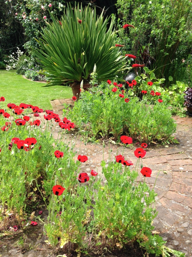 Poppies and Xeronema callistemon
