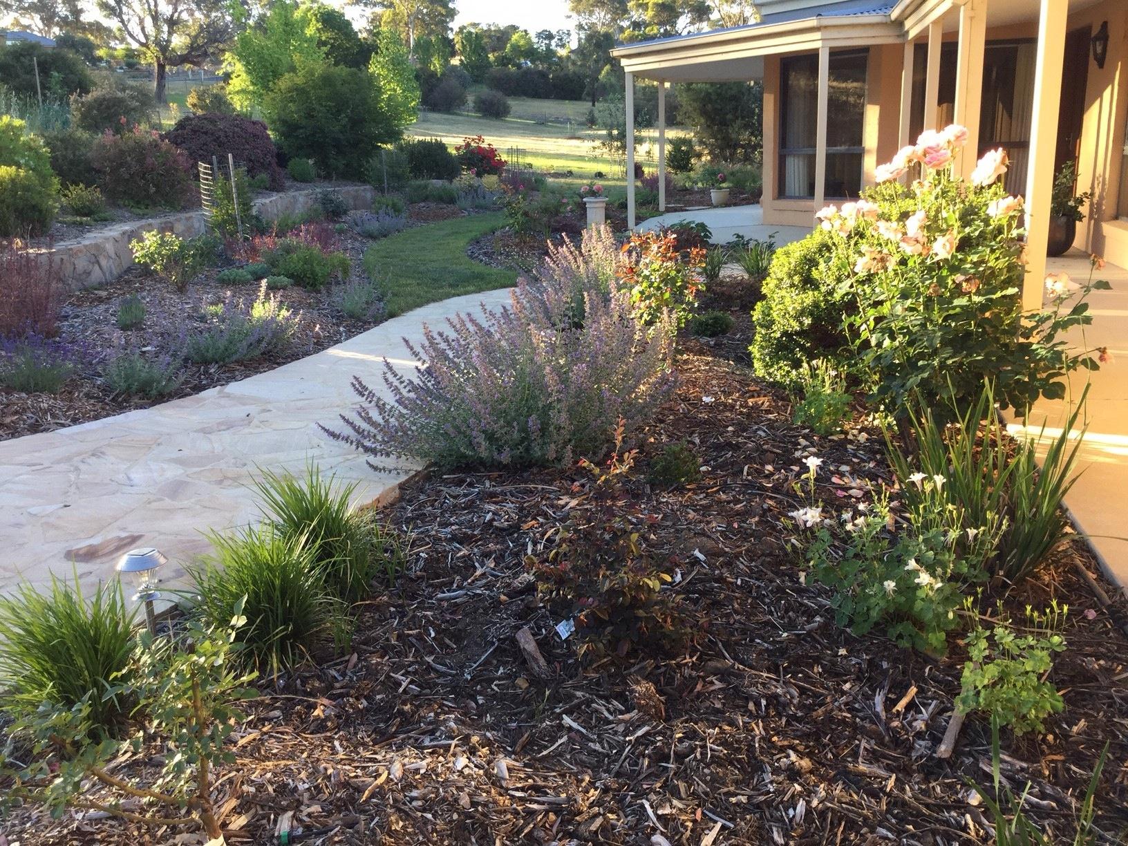 Natives: 7 Tips for a High Impact Australian Garden – Janna