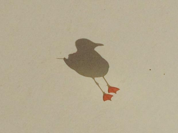 Seagull at Church Point. Janna Schreier-2