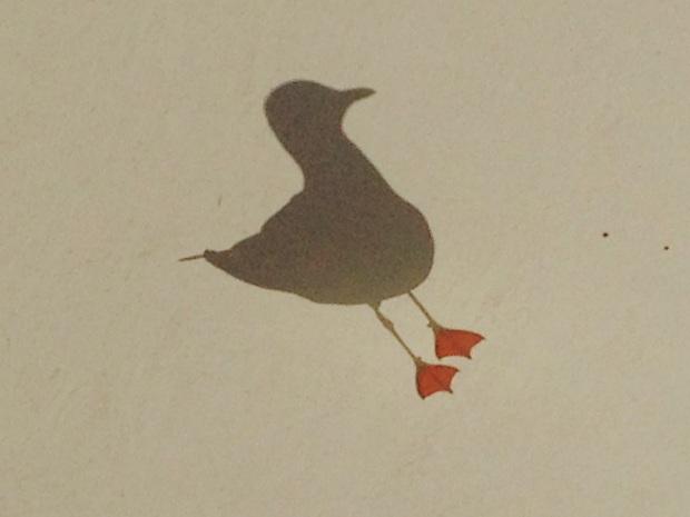 Seagull at Church Point. Janna Schreier-3