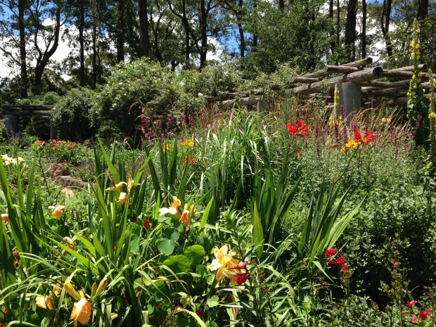 Stunning herbaceous plantings at the Formal Garden in Mount Tomah Botanic Garden