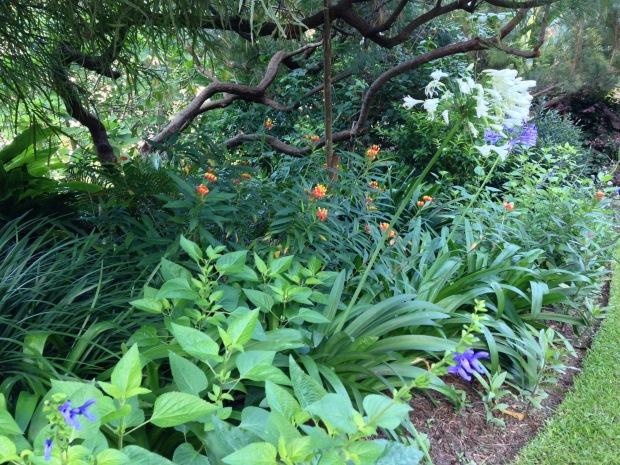 Sun-loving plants at Wendy Whiteley's Secret Garden