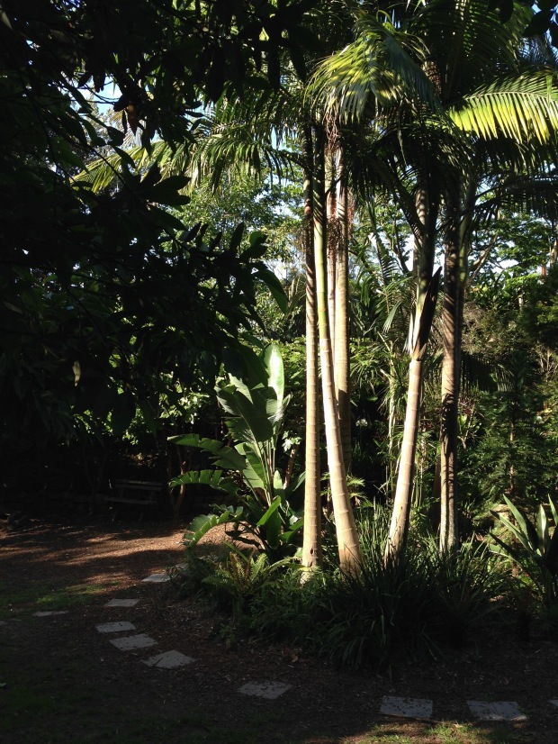Tall palms provide shade at Wendy's Secret Garden