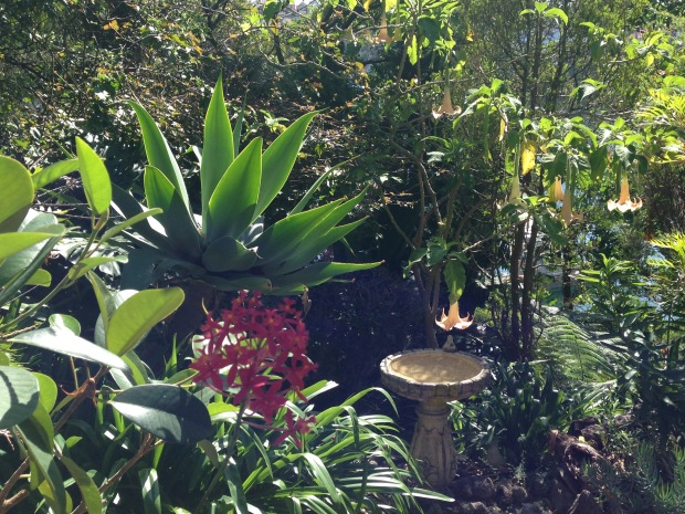 Bird bath at Les and Ruby's garden in Cremorne Point Janna Schreier