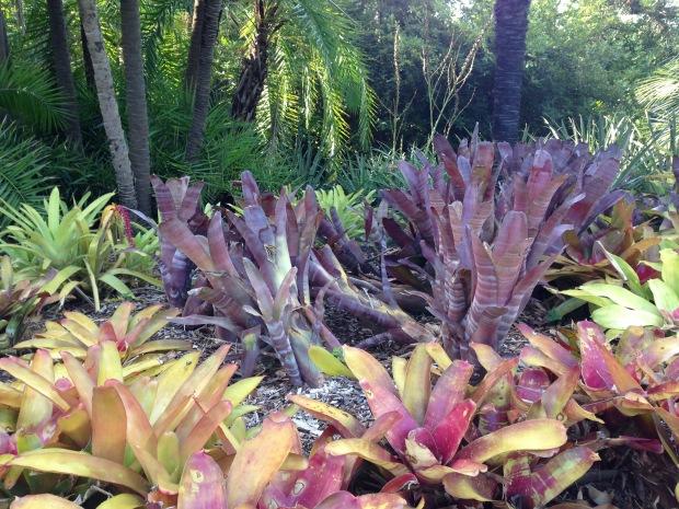 Brightly coloured Bromeliads at the Melbourne Botanic Gardens. Janna Schreier
