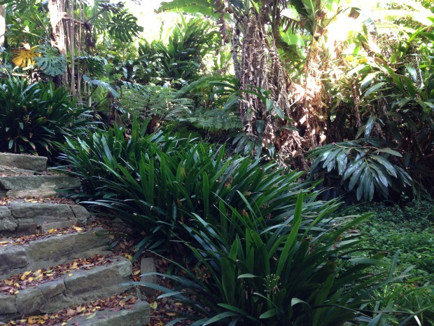 Clivia and Philodendron at Cremorne Point. Janna Schreier