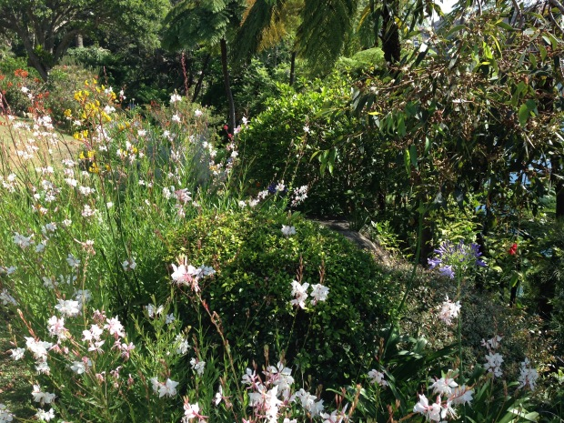 Dietes, Anigozanthus and Agapanthus at Cremorne Point Janna Schreier