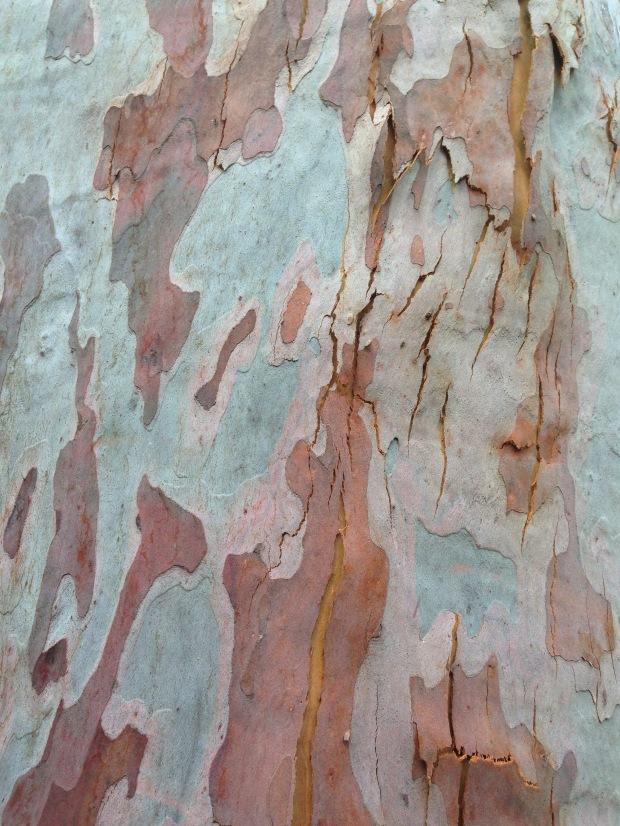 Eucalptus bark. Janna Schreier