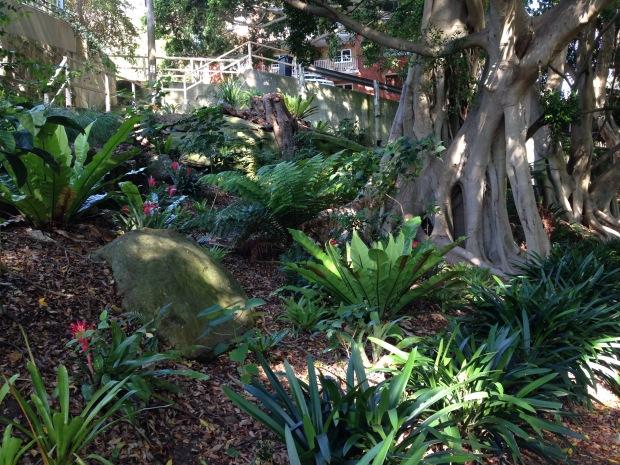 Ficus, Asplenium, Cliva, bromeliads. Janna Schreier