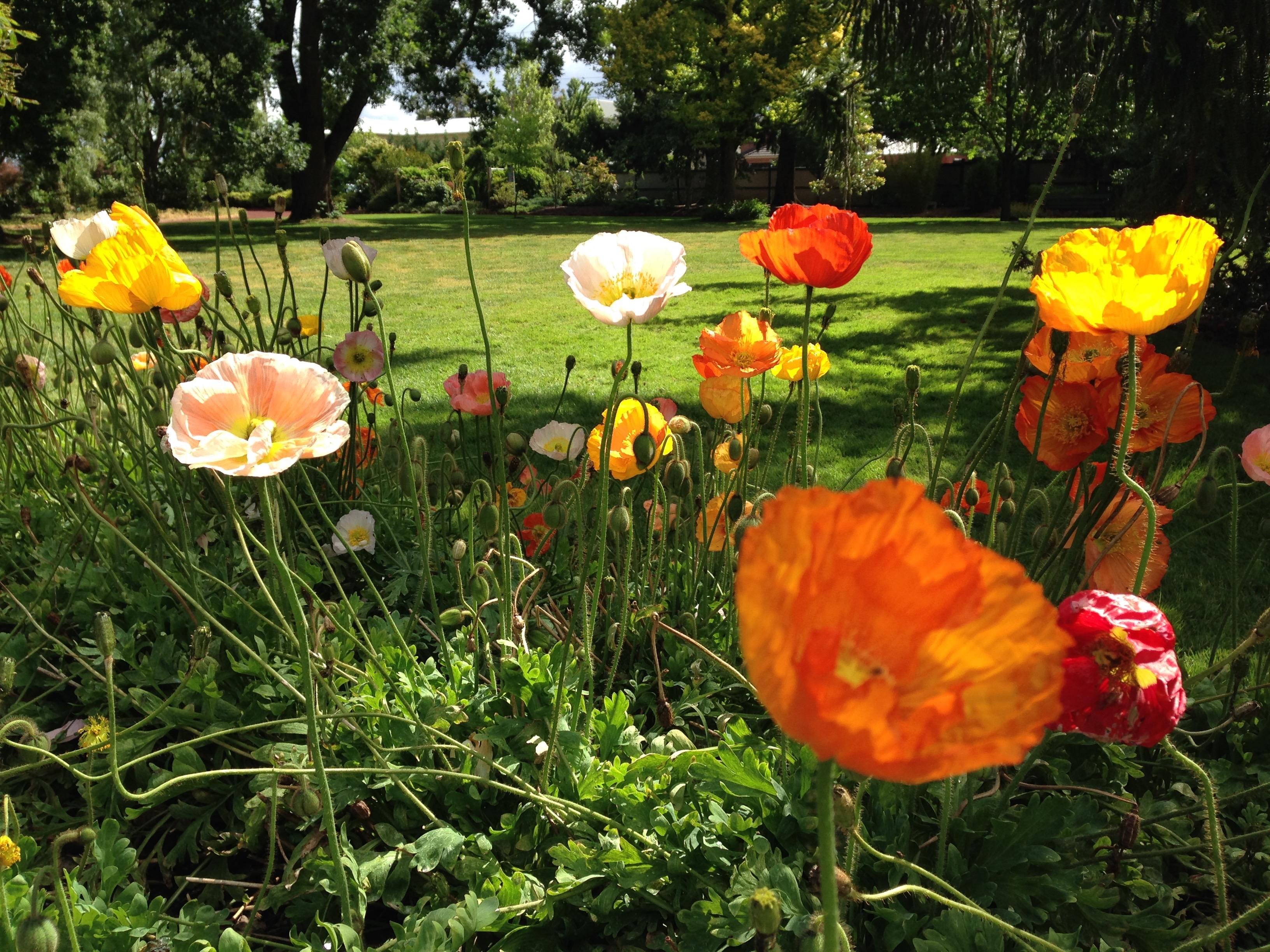 Ballarat Botanic Garden Janna Schreier Garden Design