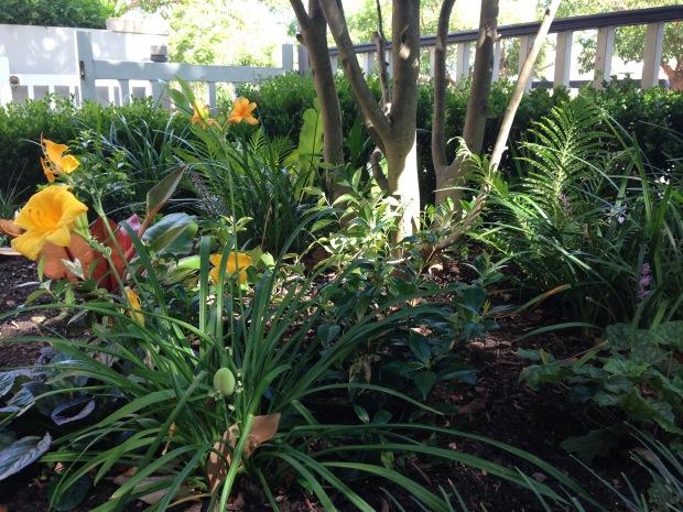 Janna Schreier Front Garden-2