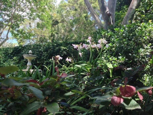 Janna Schreier's home garden