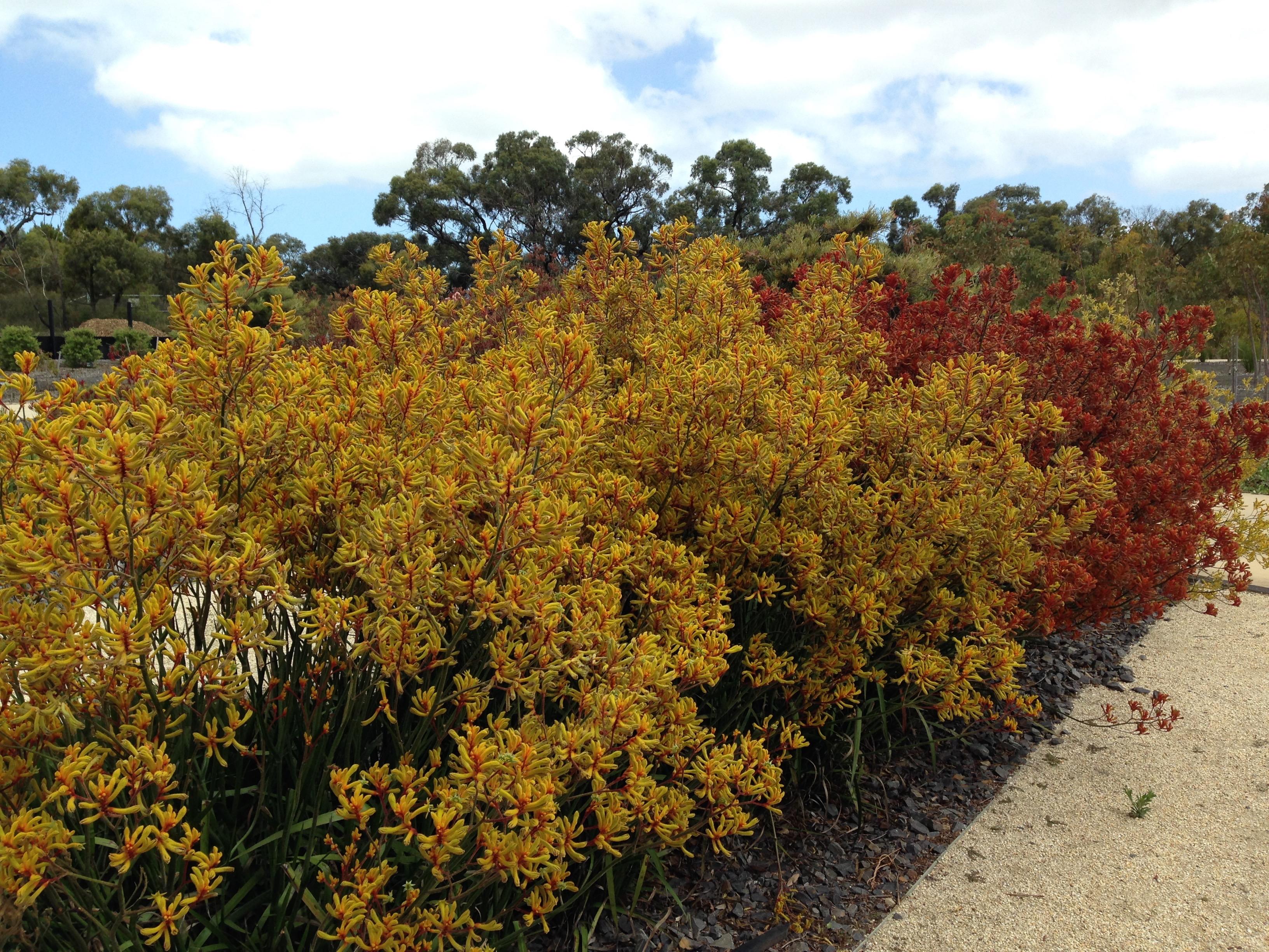 natives  3 tips for a high impact australian garden  u2013 janna schreier garden design
