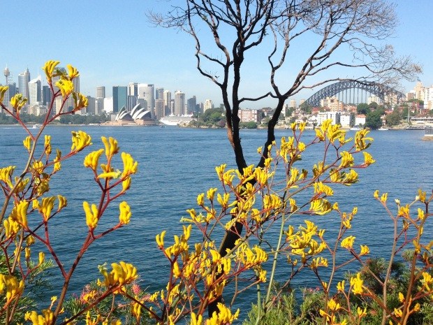 Kangaroo paws - even more stunning than the Sydney Opera House! Janna Schreier