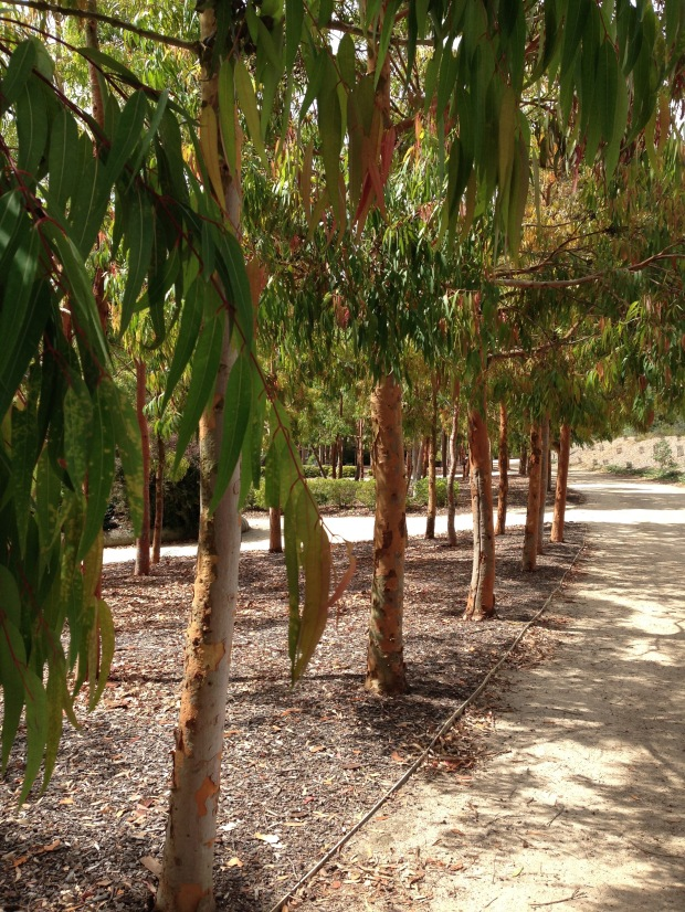 Limes, bronzes, greys, greens and browns of this Eucalypt. Janna Schreier