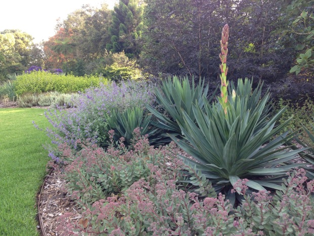 Mauve and pink flowers in the newly planted bed at Melbourne Botanic Garden. Janna Schreier