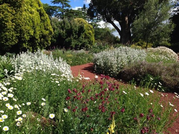 Mixed perennials at Ballarat Botanic Gardens. Janna Schreier