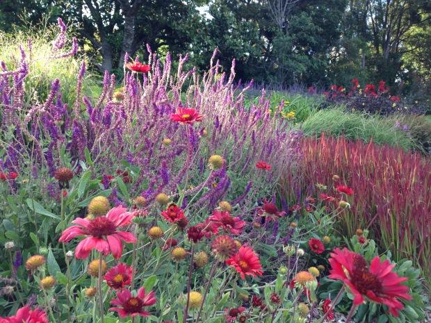 Pink perennials at Melbourne Botanic Garden. Janna Schreier