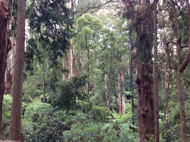 Sherbrooke Memorial Gardens, Dandenong Ranges. Janna Schreier