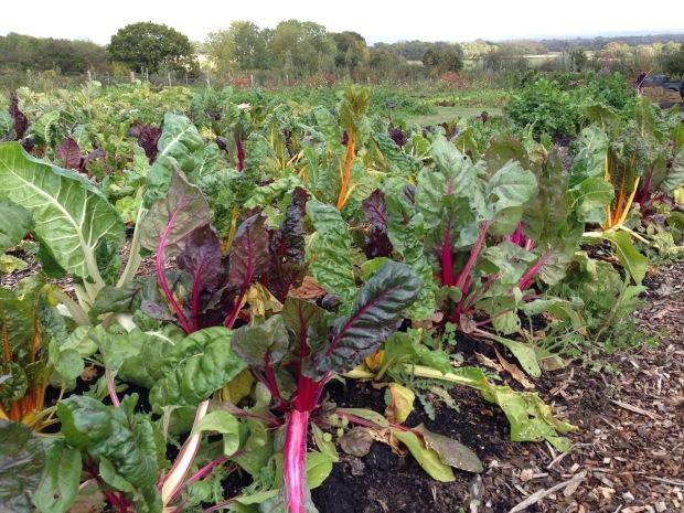 Sissinghurst Vegetable Garden Janna Schreier