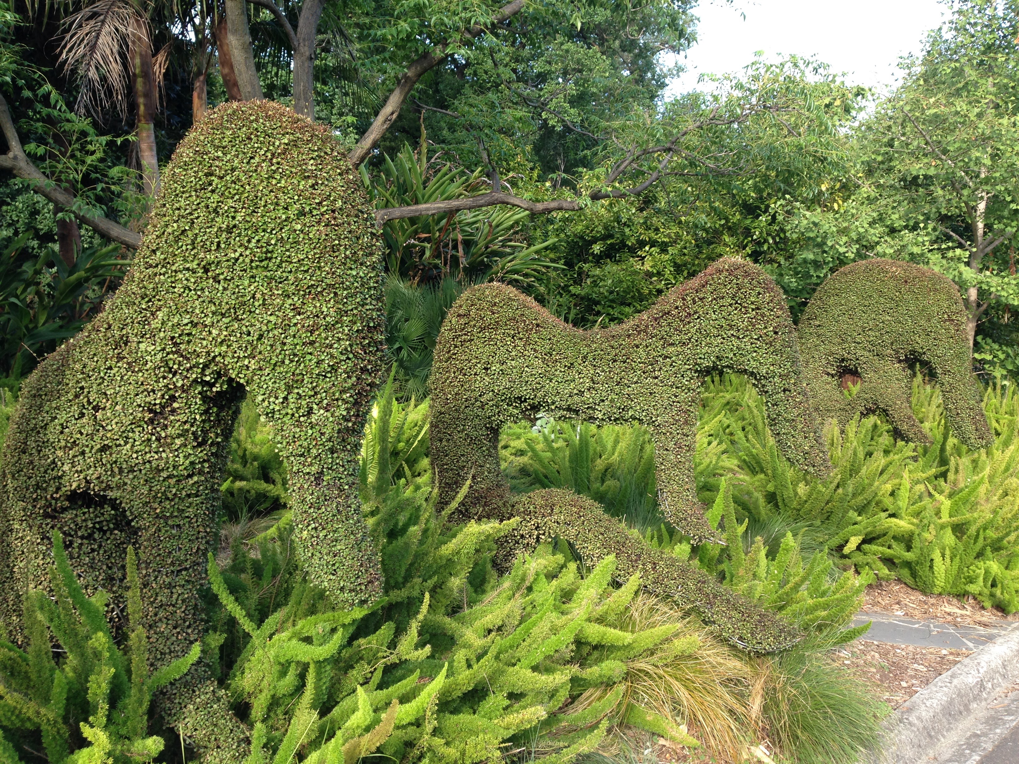 royal botanic gardens melbourne a new experience every