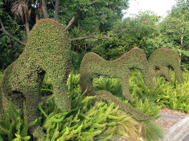 Topiary at the Melbourne Botanic Gardens. Janna Schreier